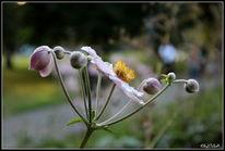Park, Blüte, Garten, Sommer
