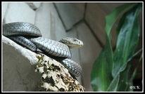 Schlange, Fotografie, Reptilium, Zoo