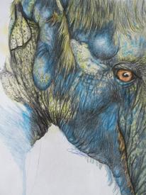 Blau, Elefant, Zeichnung, Zeichnungen