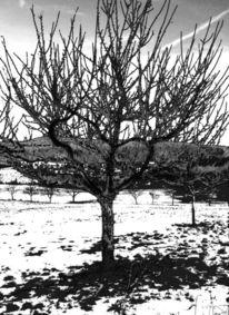 Fotografie, Winter, Stimmung, Baum3