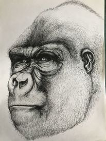 Stärke, Blick, Selbstportrait, Gorilla
