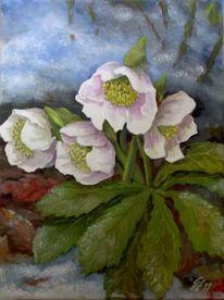 Blumen, Winter, Christ schneerose, Malerei