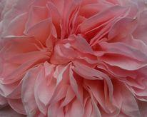 Blätter, Poesie, Rose, Fotografie