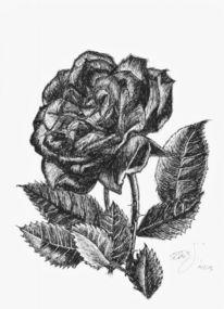 Rose, Schwarz, Weiß, Tusche