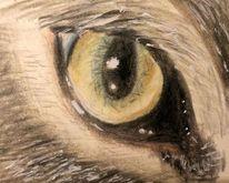 Katze, Augen, Blick, Zeichnungen