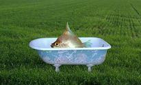 Badewanne, Wiese, Fisch, Mischtechnik