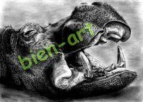 Fotografie, Kontinent, Wohnzimmer, Zoo