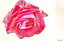 Romantik, Rosenkavalier, Makro, Rot
