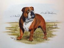 Hund, Bulldogge, Malerei, Englische