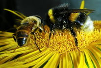 Fliege, Teil, Insekten, Blüte