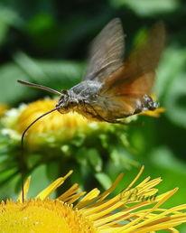 Insekten, Blüte, Natur, Schmetterling