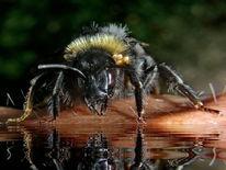 Tiere, Insekten, Wildtier, Makro