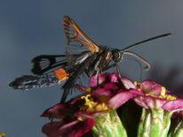 Schmetterling, Makro, Insekten, Natur