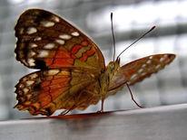 Natur, Tiere, Insekten, Schmetterling