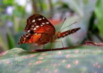 Schmetterling, Natur, Fotografie
