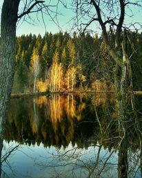 Wasser, Spiegelung, Fotografie, Spiegel