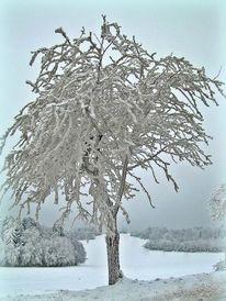 Winter, Weiß, Fotografie