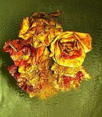 Blühen, Rose, Basteln, Pflanzen