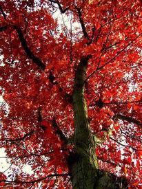 Baum, Pflanzen, Herbst, Rot
