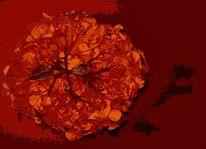 Blüte, Hortensien, Bildbearbeitung, Rot