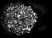 Blüte, Hortensien, Schwarz, Silber