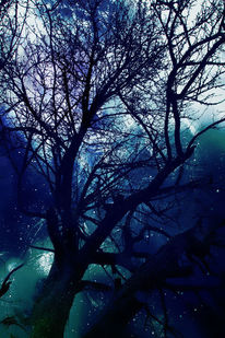 Baum, Fantasie, Nacht, Fotografie