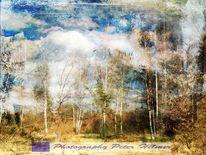 Wolken, Birken, Baum, Landschaft