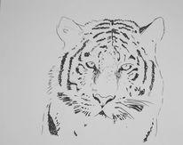 Katze, Tiger, Zeichnungen,