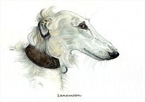 Hundeportrait, Barsoi, Windhund, Sighthound