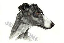 Hund, Whippet, Windhund, Zeichnungen