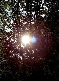 Sonne, Baum, Licht, Fotografie