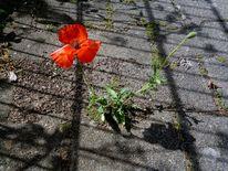 Schatten, Blumen, Straße, Sonne