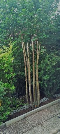 Busch, Holz, Baum, Fotografie