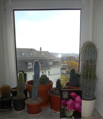 Kaktus, Kakteenhaage, Pinnwand