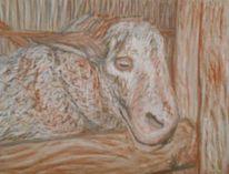 Kreide, Holz, Kohlezeichnung, Schaf