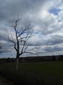Waldsterben, Monument, Baum, Tod