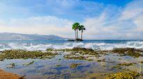 Palmen, Natur, Wasser, Atlantik