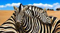 Tiere, Zebra, Natur, Freundschaft