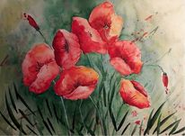 Blumen, Rot, Pflanzen, Mohn