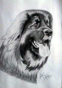 Hund, Zeichnen, Kohlezeichnung, Blei