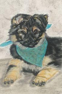 Pastellmalerei, Hundeportrait, Zeichnung, Schäferhundwelpe