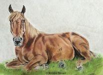Pastellmalerei, Pferdeportrait, Zeichnungen, Pferde