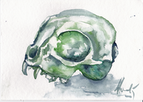 Schädel, Tiere, Aquarellmalerei, Katze