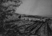 Zypressen, Naturalismus, Natur, Feld