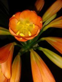 Fotografie, Bearbeitung, Pflanzen, Digitale kunst