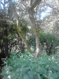 Natur, Baum, Digitale kunst
