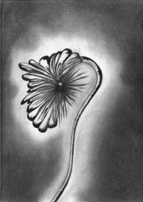 Paradies, Pflanzen, Metamorphose, Natur
