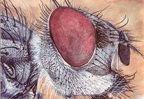 Fliege, Augen, Haare, Malerei