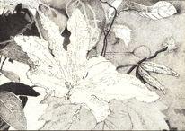 Blumen, Schwarz weiß, Blätter, Blüte
