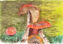 Pilze, Natur, Fliegenpilz, Wald